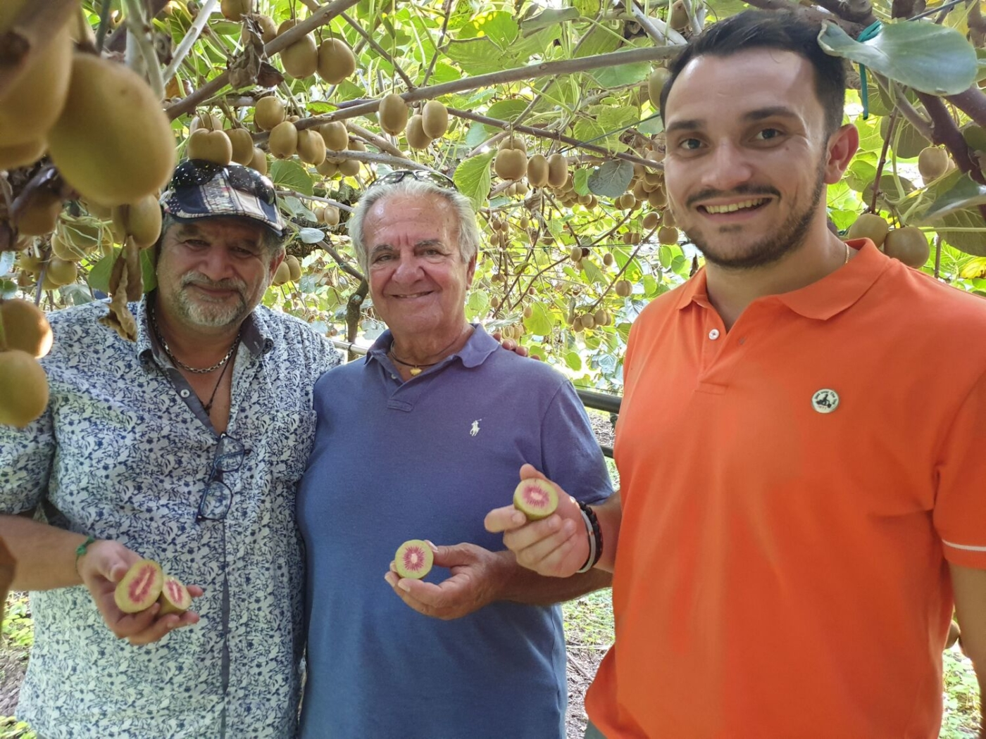 , La production de kiwi rouge made in Provence prête à conquérir le marché français, Made in Marseille